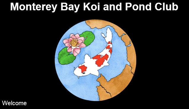 Monterey Bay Koi and Pond Club