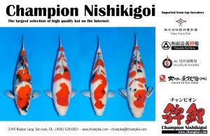 Champion Hlf Pg